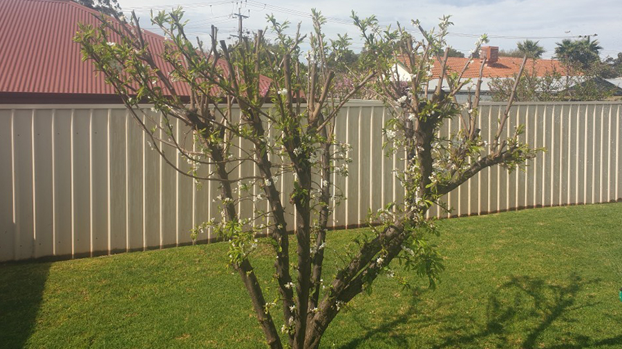 tree-pruning-branch-cutting-northern-suburbs-garden-maintenance-2
