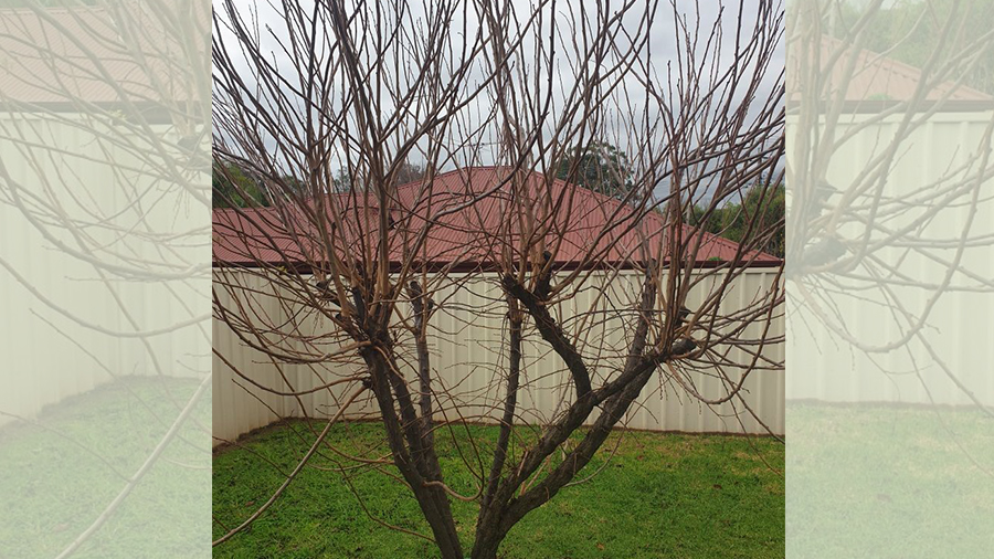tree-pruning-branch-cutting-northern-suburbs-garden-maintenance-4
